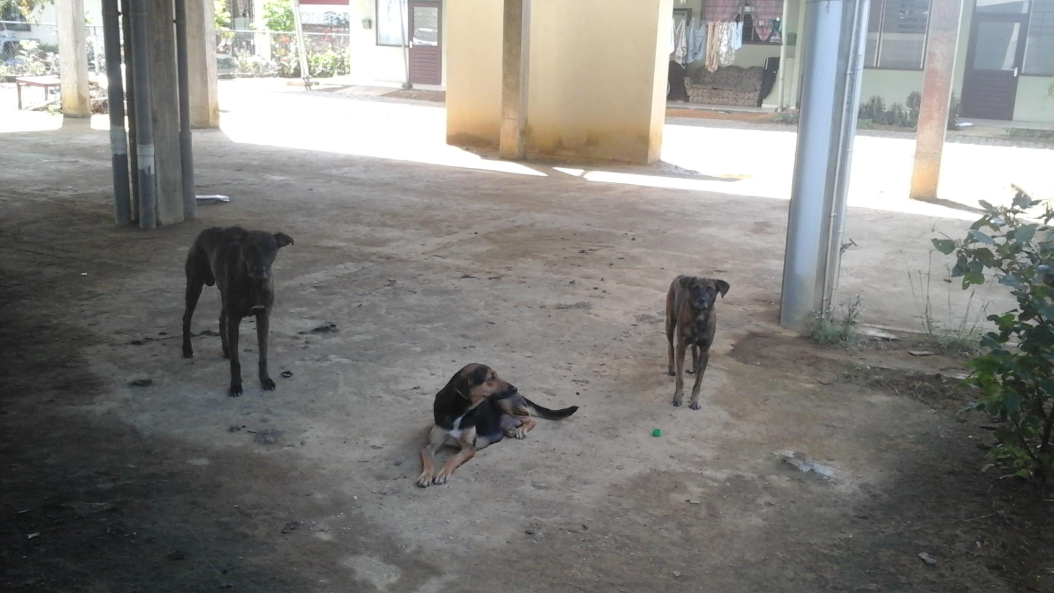 Ik kan niks doen armoede in Suriname
